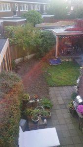 Buxus gerooid. achtmeter ruimte in de tuin.
